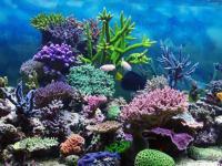 珊瑚种类繁多 形态各异